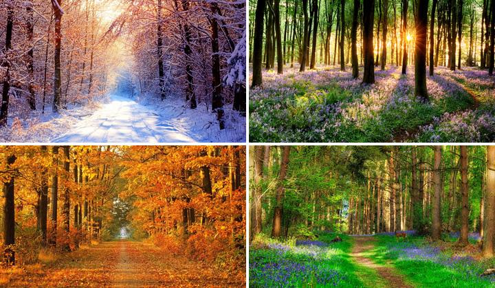 Znalezione obrazy dla zapytania 4 pory roku